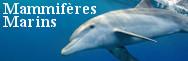 - Mammifères marins