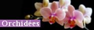 - Orchidées