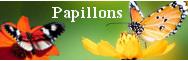 - Papillons