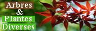 - Plantes diverses & arbres