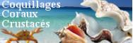 - Coquillages, coraux, crustacés
