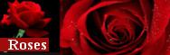 - Roses
