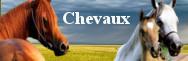- Chevaux
