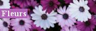 - Fleurs